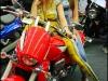 Suzuki girls -carcrazybiker